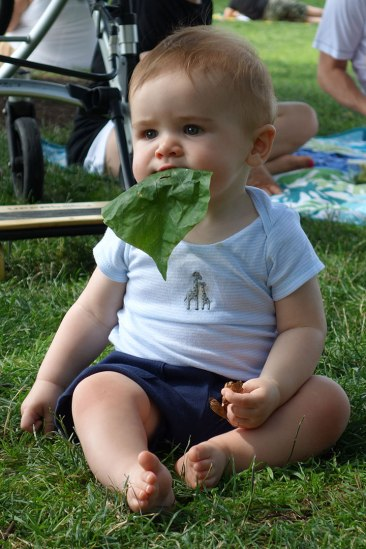 Henry foraging for salad in the park.