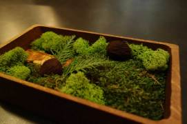 "One of the dessert courses: chocolate ""walnut"" truffles (presented on bed of moss)."