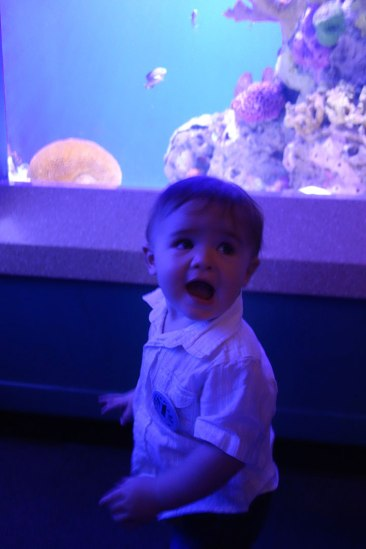 Excitable boy!