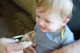 Uncle Chris shows Henry a praying mantis.