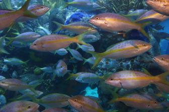School of fish.