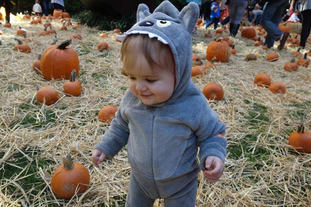 Walking through the pumpkin patch.