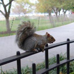 squirrel_10.19.13