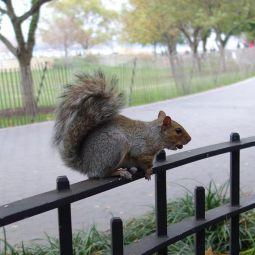 squirrel_10.19.13