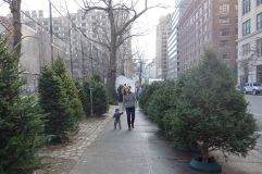 Sidewalk Christmas tree lot.