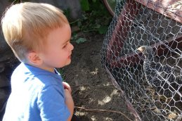 Investigating the chicken coop.