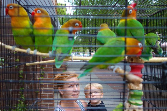 birdcage_08.30.14