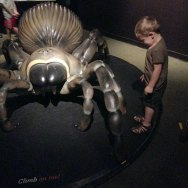 Spiders at the Natural History Museum.